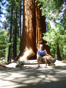 Sequoia Nat'l Forest